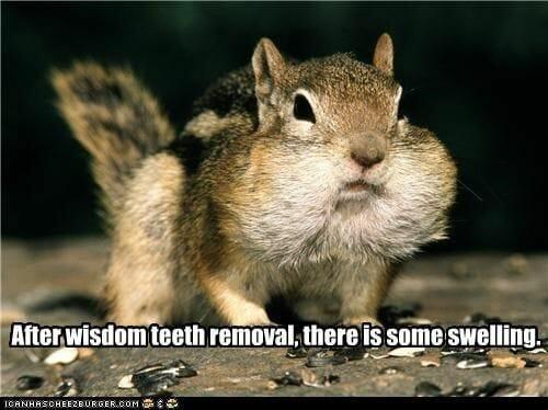 chipmunk wisdom teeth meme